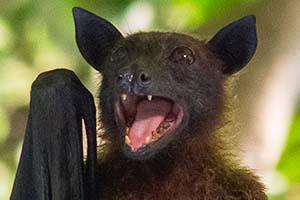 thumb bat